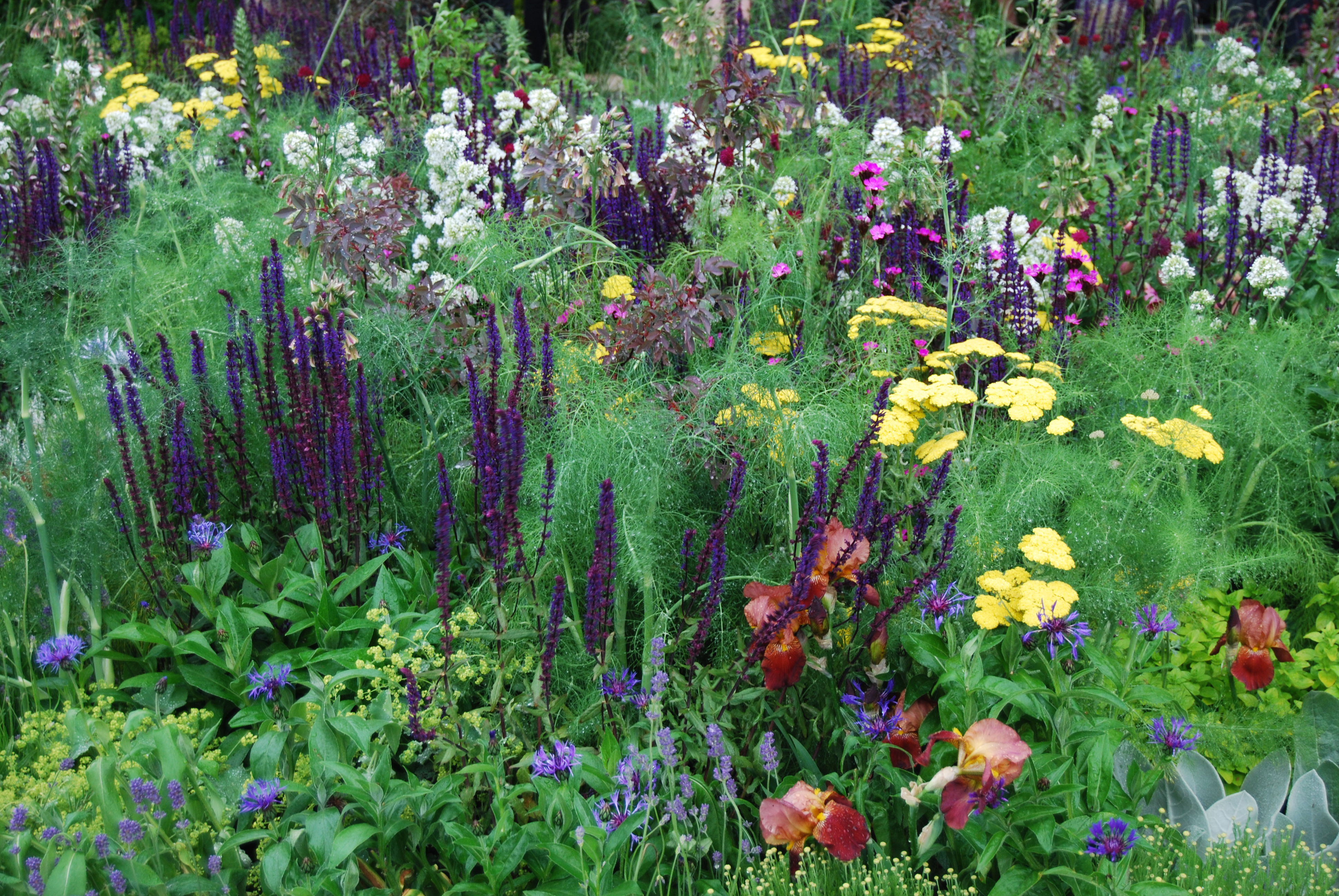 Beauty and the beets make a truly mixed border the for Planting schemes for small gardens